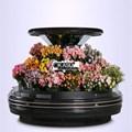 Tủ bảo quản và trưng bày Hoa tươi OKASU OKS-SG18YA